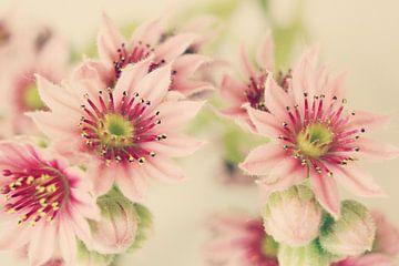 Roze bloem van Sebastiaan van der Burg