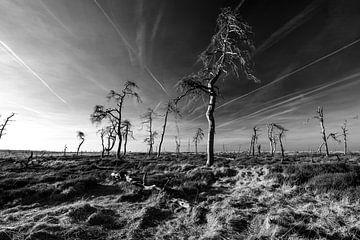 Hohes Venn in Schwarz und Weiß - 2 von Edwin van Wijk