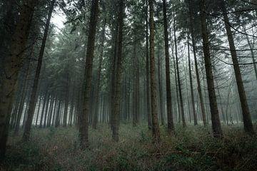Mystischer Wald van Severin Pomsel