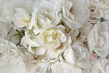 Weiße Rosen von Yvonne Blokland
