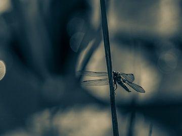 Libelle II van Diane van Veen