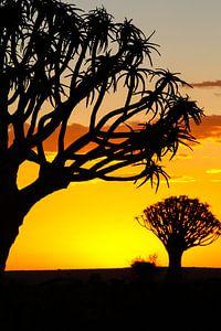 Kokerbomen in Namibië van Edith Büscher