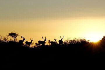 Landschap met damherten by sunset van Yvonne Steenbergen