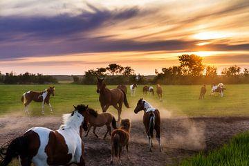 Spelende paarden tijdens zonsondergang van