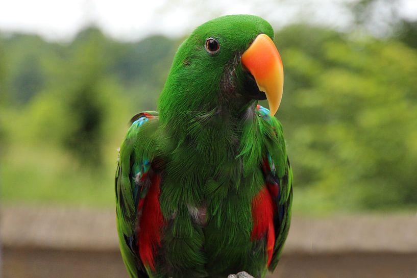 Ara - Papegaai - vogel  van Fotografie Sybrandy