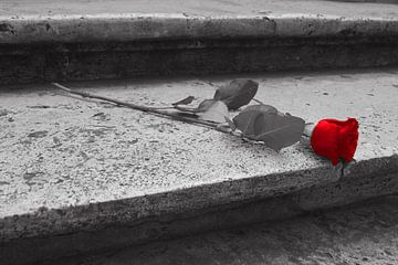 Rode roos op een stenen trap von Anouk Noordhuizen