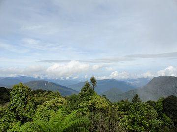 Maleisie Cameron Highlands von Bianca Louwerens