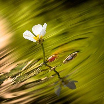 Witte bloem met groen water en goudvis van Victor van Dijk