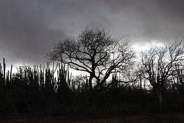 Katiuse und Bäume auf Bonaire von Silvia Weenink