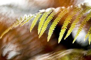 Herfstkleuren 2 van Paulien Varkevisser
