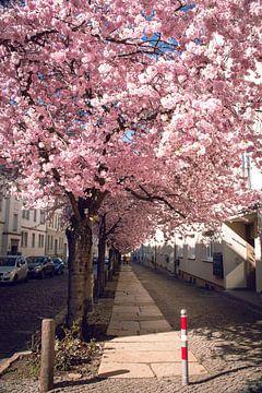 Rosa Farben von D.R.Fotografie