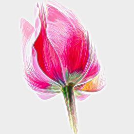 Tulip Art van Jacqueline Gerhardt