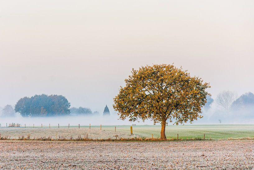 The lonely tree van Diana de Vries