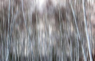 Malerischer Wald von Thomas Jäger
