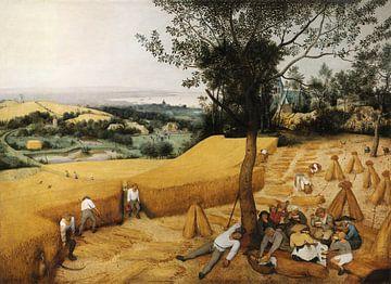 De Oogsters, Pieter Bruegel sur
