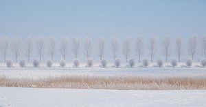 Panorama winterlandschap met riet en bomenrijen in Biesbbosch