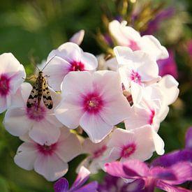 Roze bloem met insect sur Lotte Veldt