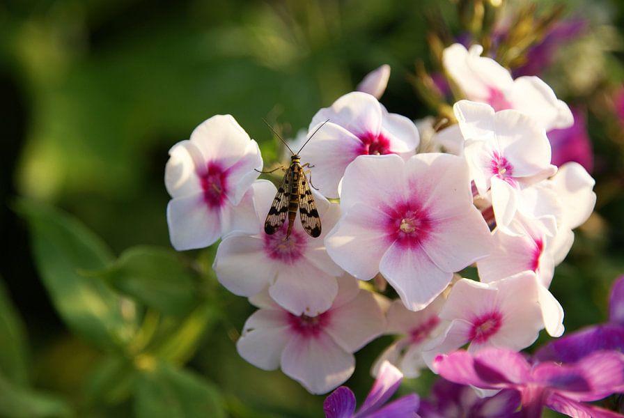 Roze bloem met insect van Lotte Veldt