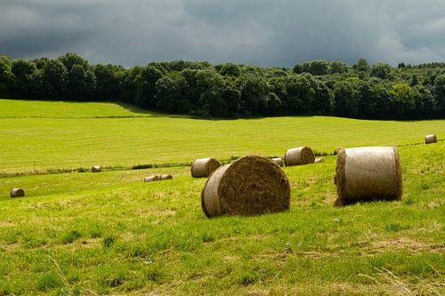 Limburgs landschap - 2