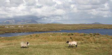 Typisch Ierland sur Ageeth g