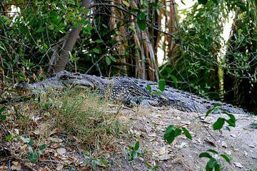 Krokodil Okavango Delta van Merijn Loch