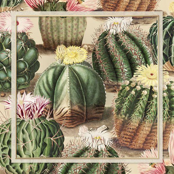 Le Collage de Cactus Vintage van Marja van den Hurk