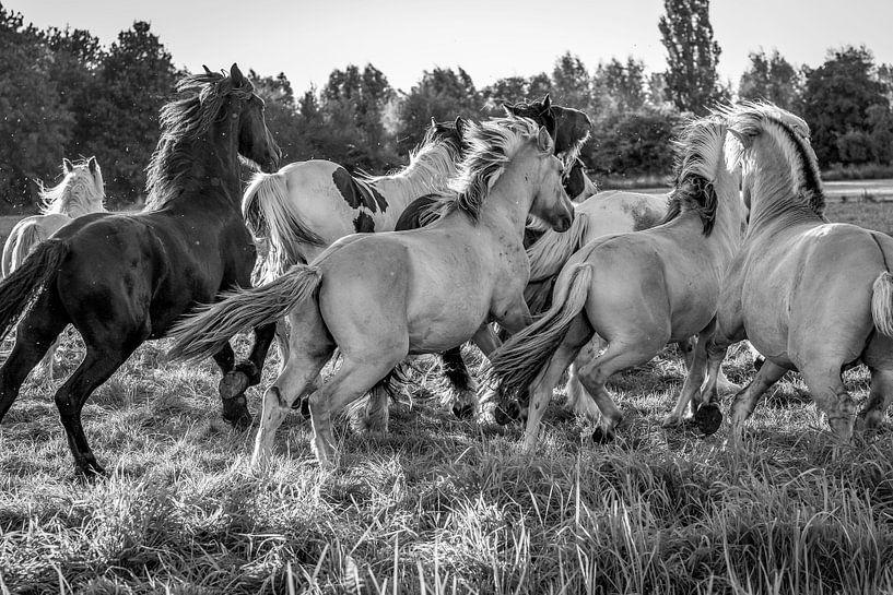 Paardenkracht van Natasja Claessens