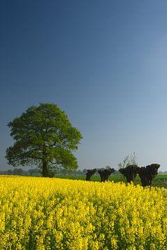 Lente in Twente von Remco Nijland