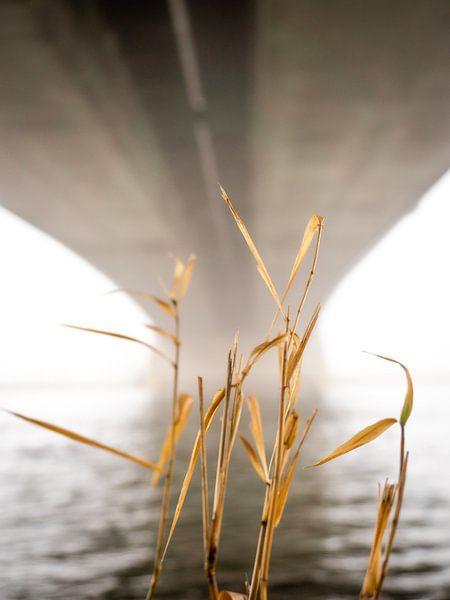 Onder de brug van Mattijs Diepraam