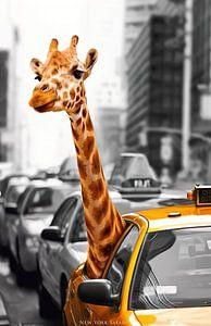 Giraffe in Taxi van David Potter