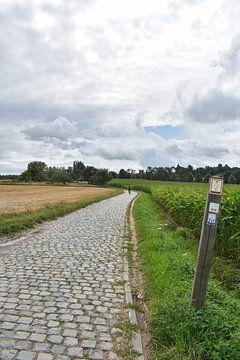 Radfahrer auf dem Gipfel des Kwaremont von Gonnie van Hove