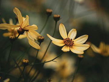 Gele bloem van José Lugtenberg