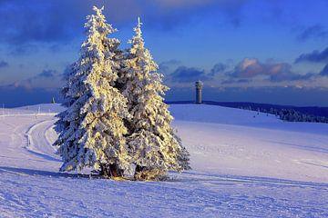 Winter im Schwarzwald von Patrick Lohmüller