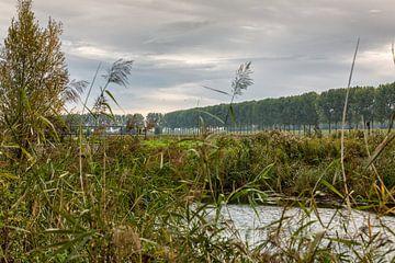 Automne du Dordtse Biesbosch