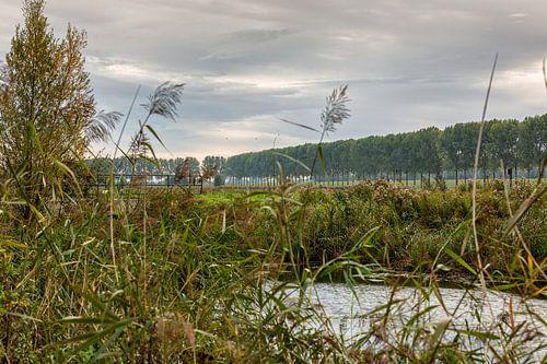 Dordtse Biesbosch Herfst