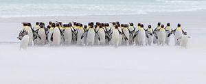 Just a few penguins