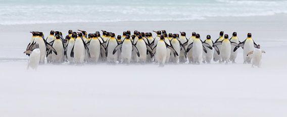 Just a few penguins (nur ein paar Pinguine) von Claudia van Zanten