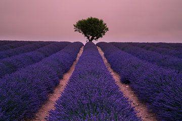 Het parfum van relaxatie van Joris Pannemans - Loris Photography