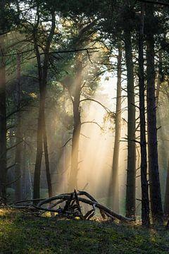 De zon schijnt door de bomen van Michel Geluk