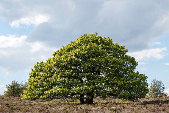 Mooie grote boom van Anjo ten Kate