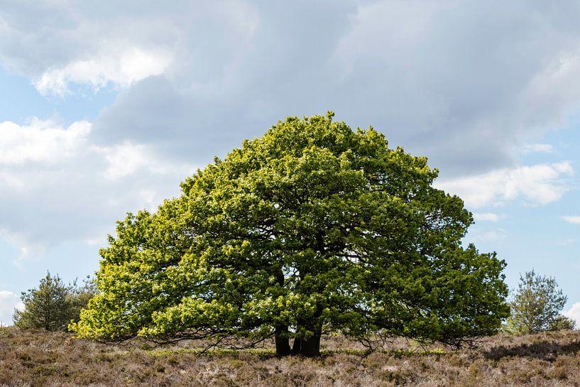 Schöner großer Baum von Anjo ten Kate
