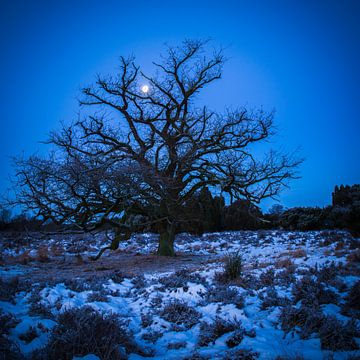 Moon and Tree van Eriks Photoshop by Erik Heuver