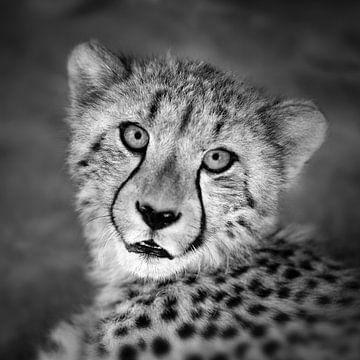 Portret van Cheetah van Frans Lemmens