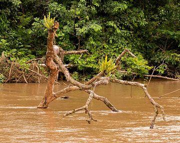 Costa Rica: La Fortuna van Maarten Verhees