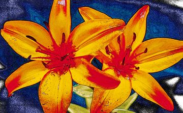 Schets van lelies, rood,geel en blauw van