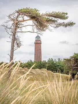 Deutscher Leuchtturm mit schiefer Kiefer und trockenem Gras vor wolkigem Himmel. von