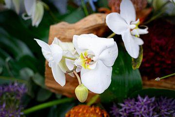 orchidee van Dominique van Ojik