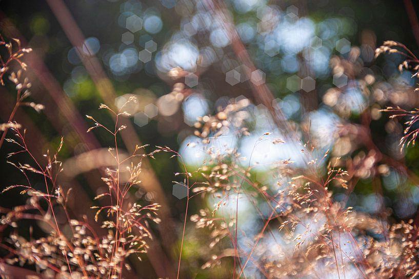 Natuur close up in beige van Brian Morgan