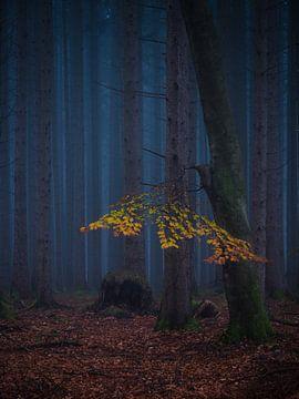 Letzte Herbstfarben von Denis Feiner