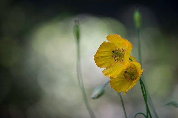 Yellow Flower van Harald Harms